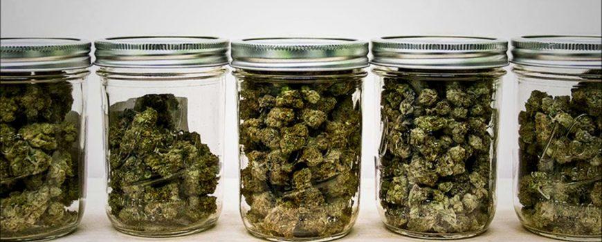 Frascos de cannabis