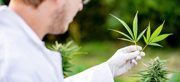 Drcannabis